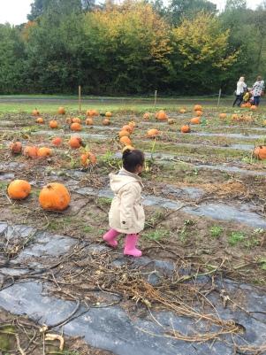 katieviolet-pumpkin