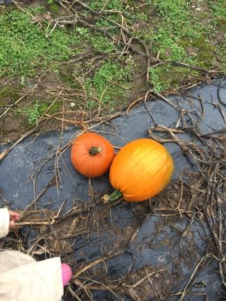 katieviolet-pumpkin1